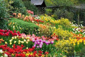 Lễ hội hoa khác